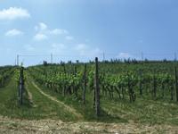 Culture Course - Wine and Olive farms - ABC de' Conti